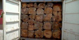 Compañía de transporte se detiene a las exportaciones de madera sobre el contrabando