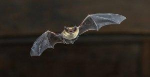 Funcionarios de Utah advertir público acerca de los murciélagos después de numerosos casa infestaciones