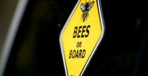 Incluso durante la pandemia de la apicultura sigue siendo un servicio esencial