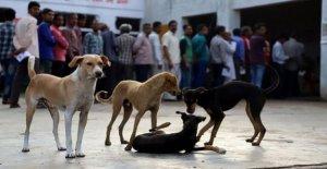 India estado de la carne de perro prohibición aclamado como punto de inflexión