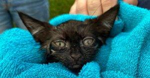 Largo de la policía de la Isla de rescate del gatito de drenaje pluvial