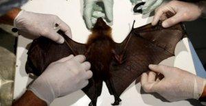 Más brotes, si seguimos la explotación de la fauna silvestre de la ONU