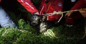 Perro salvó por la cueva equipo de rescate después de la caída