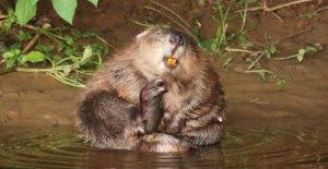 Beaver familias ganar legales derecho a permanecer'
