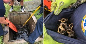 De incendios de la Florida equipo de rescate y salva a los patos atrapado en una tormenta de cerebros como Tormenta Tropical Isaias subió costa