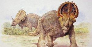 Dinosaurio con diagnóstico de cáncer maligno por primera vez: los investigadores dicen