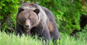 El Parque nacional de los problemas del Servicio de hilarante advertencia sobre el oso de seguridad: no empuje hacia abajo de una manera lenta amigo'