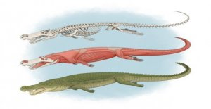 'El Terror de cocodrilo' tenía los dientes 'el tamaño de los plátanos,' a los investigadores a encontrar