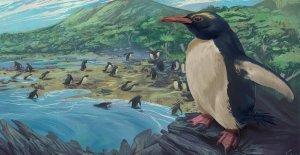 Eslabón perdido que se encuentra? 3M-año-viejo de ojos rojos pingüino podría conectarse a moderno-día de las aves marinas