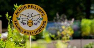 Etiqueta de advertencia para proteger a las abejas en el bloqueo de los jardines
