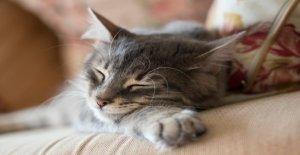 'Judgy refugio de gatito adoptado después de ir viral en Reddit