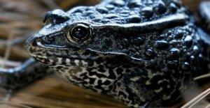 Los funcionarios de estados unidos de buscar los límites en el hábitat de especies en peligro