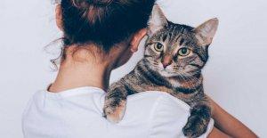 Nueva app de citas para los amantes del gato lanza Internacional del Gato del Día