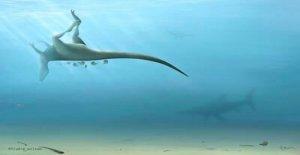 Nueva especie de dinosaurio relacionados con el Tyrannosaurus rex descubierto