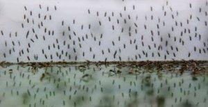 Parásito 'resistente a los medicamentos contra la malaria en África