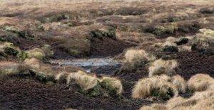 Reino unido turba de emisiones podría cancelar los beneficios forestales