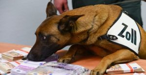 Sniffer dog capturas bocanada de dinero oculto alijo