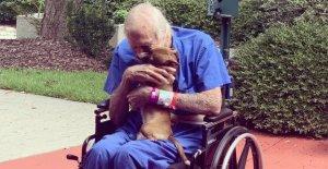 Veterano de la marina se salvó por mascota Chihuahua después de sufrir un accidente cerebrovascular