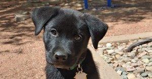 Vuelo de Southwest Airlines operador de escorts de rescate cachorro de 2.000 millas a su nuevo hogar