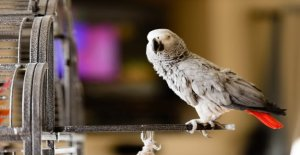 Zoo elimina los loros de la vista,...