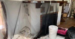 2 Hogares de California invadidos por cientos de aves en sus chimeneas: informe