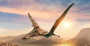 Investigadores australianos descubren el reptil volador más grande del país